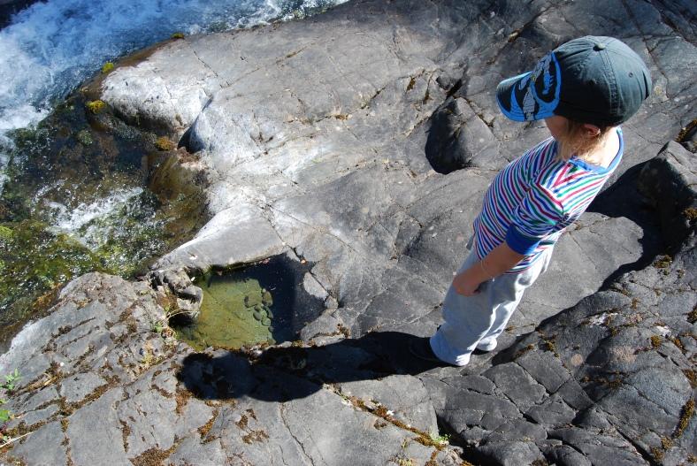 Ben scoping out a little pool of water near Elk Falls.