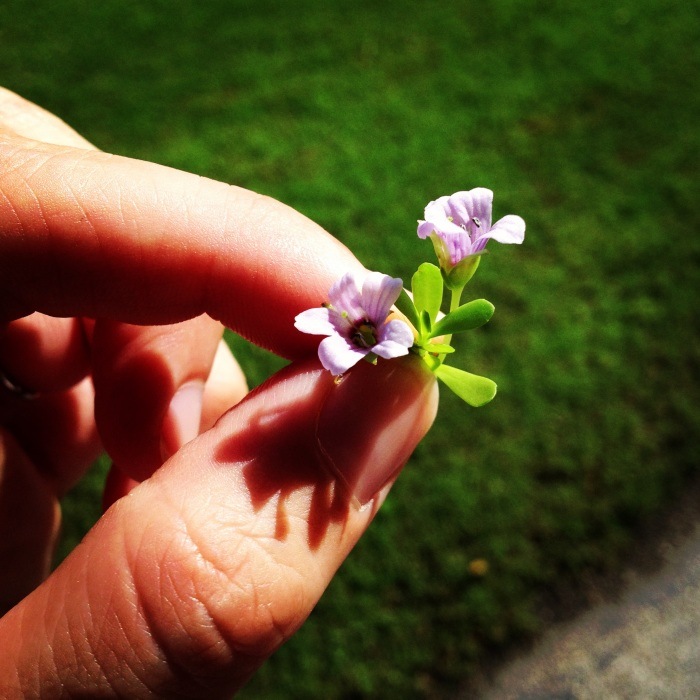 Tiny flowers Ben picked for me at the park.