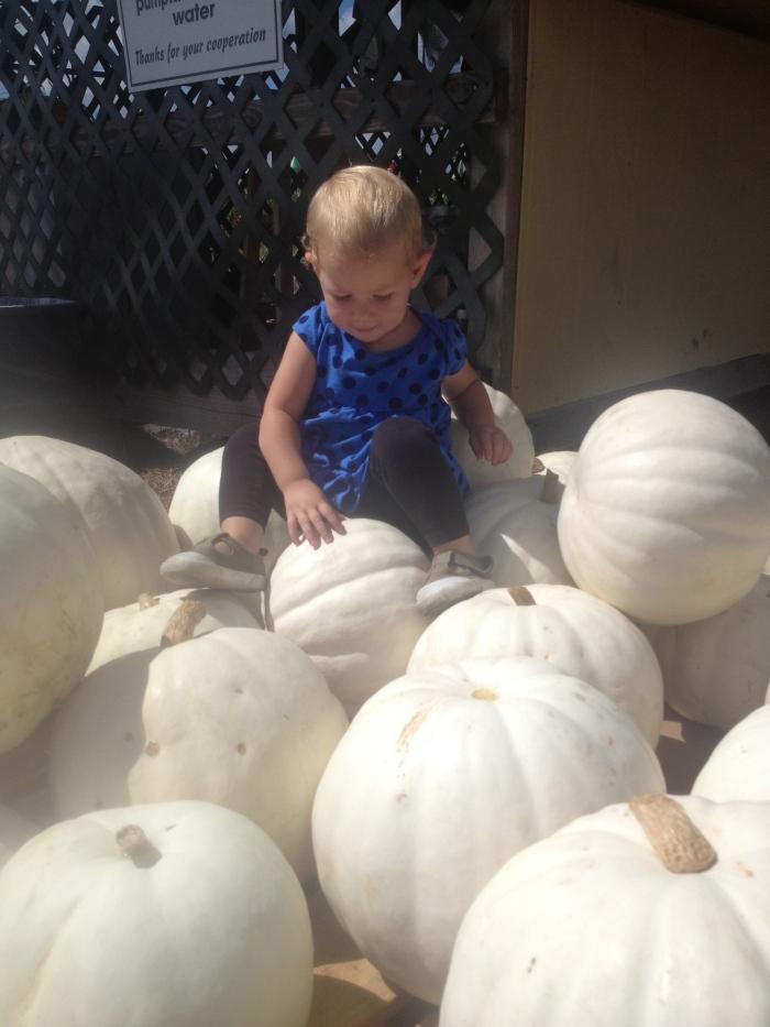 Ghost pumpkins.