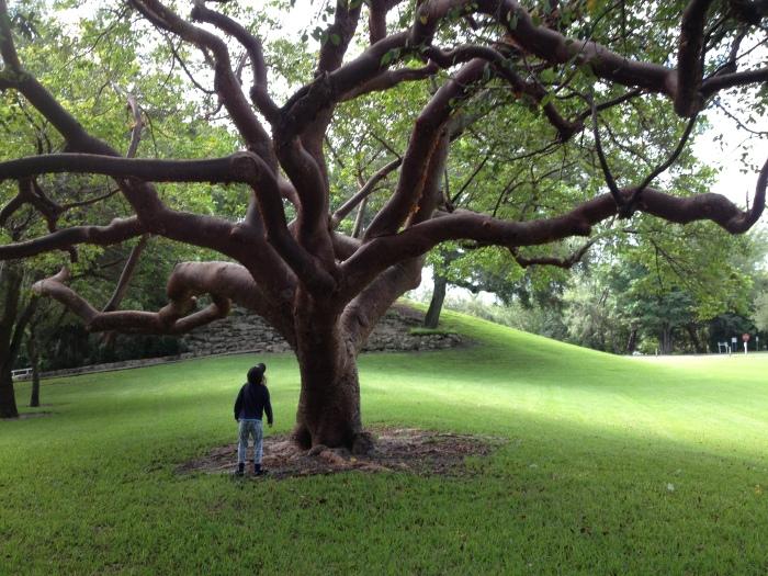 Super cool weird tree.