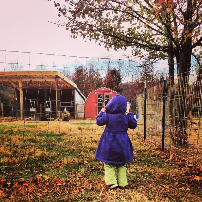 Pearlstone is adjacent to Kayam Farm, where there are goats, chickens, and many vegetables. We loved exploring the grounds!