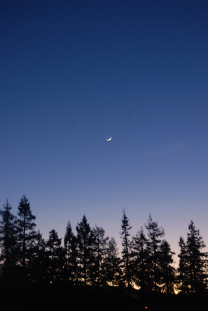 The new moon at our local park.